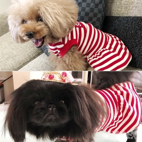 南大門市場 犬 ペット用品 シュプリーム