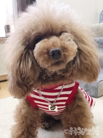 南大門市場 犬 ペット用品 ペンダント